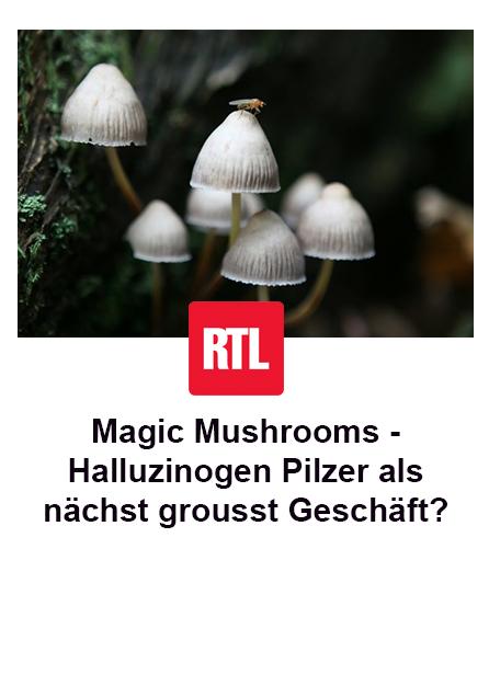Magic Mushrooms – Halluzinogen Pilzer als nächst grousst Geschäft?